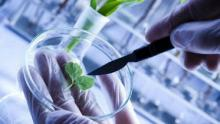 An image of a biotech scientist working on a plant