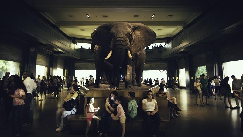 An image of an elephant sitting ignored in the middle of a crowded room